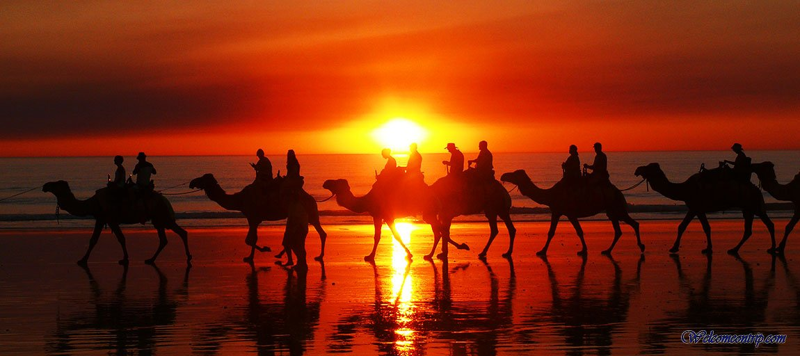 Broome - WA - Australia : Camel on the Beach