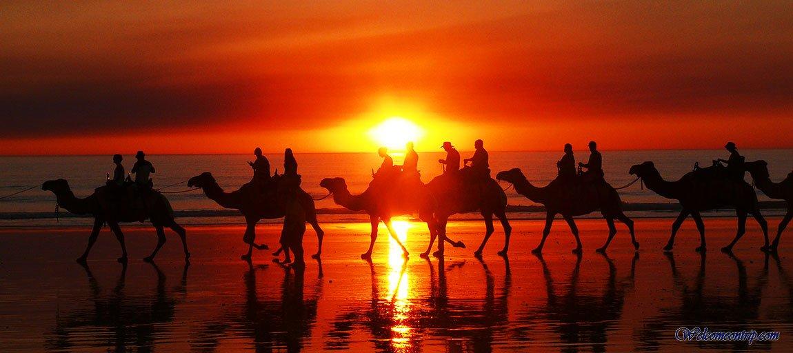 Broome - WA - Australia : Camel on the Beach